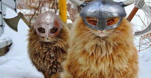 Gatos vikings? Sim, parece que eles existiram segundo pesquisas