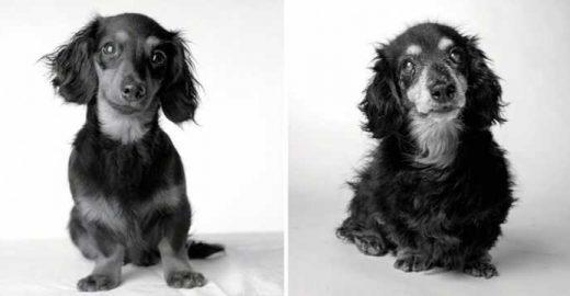 Ensaio fotográfico emocionante mostra como os cães envelhecem