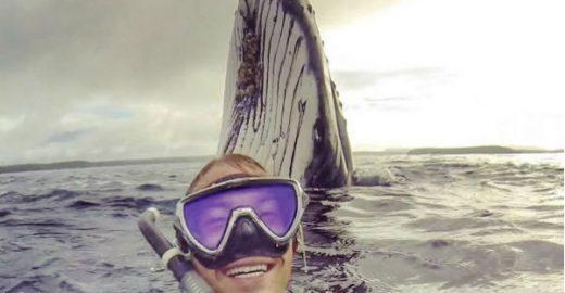 Australiano registra momento em que nadou com baleias em Tonga