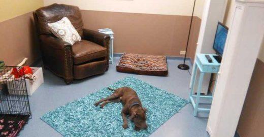 Abrigo cria quartos especiais para cachorros se sentirem em casa