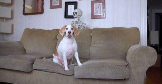 Esta pegadinha de Halloween com um cachorro conquista qualquer um