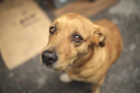 cachorro de rua olhando para cima com cara de fome