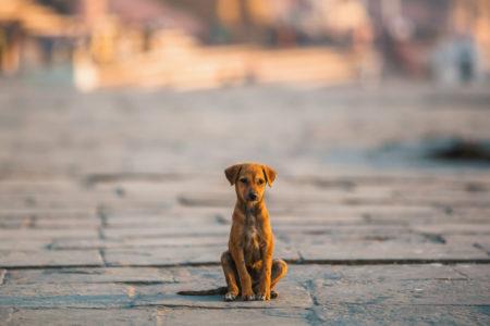 cachorro vira-lata sentando sozinho no meio da rua