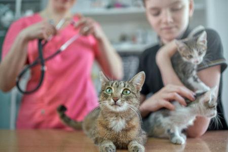 menina segura um gato enquanto há outro deitado sobre a mesa; no fundo médica veterinária ajeita seu estetoscópio