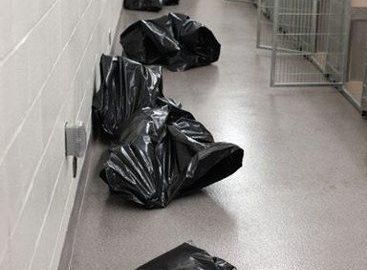 Imagem chocante mostra as consequências do abandono de animais