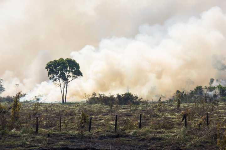 O pasto abandonado na Amazônia gerou gás carbônico equivalente a 36 anos de emissões dos carros no Brasil