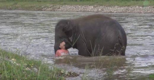 A filhote de elefante mostra amor por seu treinador