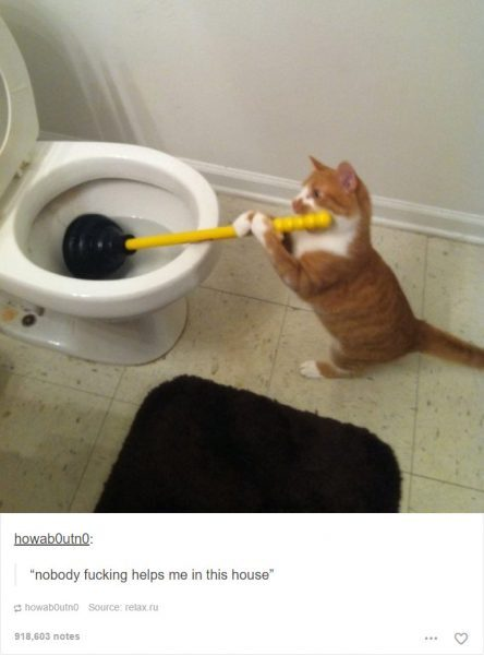 funny-tumblr-cats-2-5811ce5150f31__700