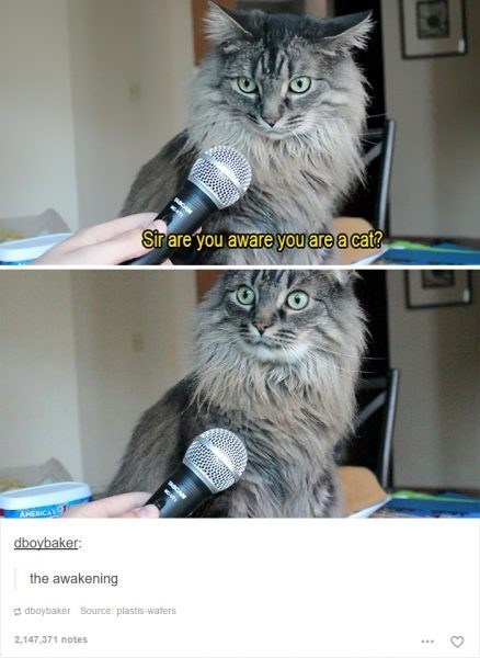 funny-tumblr-cats-25-5811ce8f913ad__700
