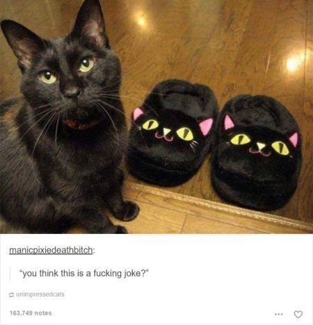 funny-tumblr-cats-49-5811ced059089__700