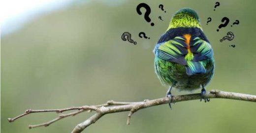 15 livros gratuitos para identificar aves