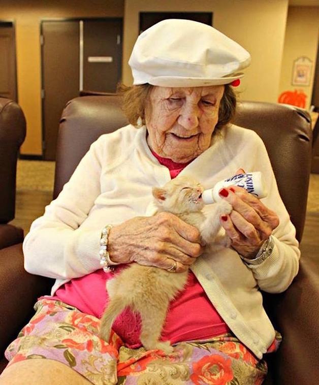 Idosos cuidam de gatinhos órfãos em asilo