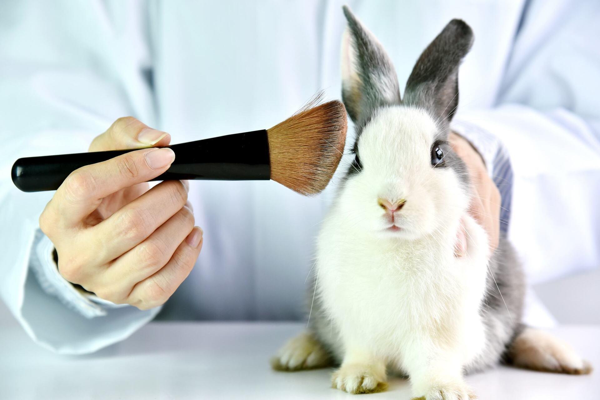 Maquiagem testada em animal