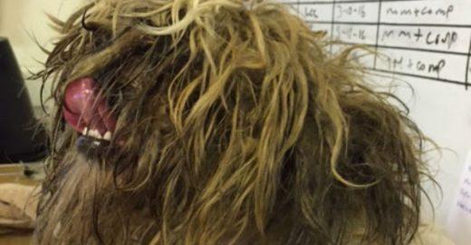 Cão volta a andar e enxergar depois de ser resgatado