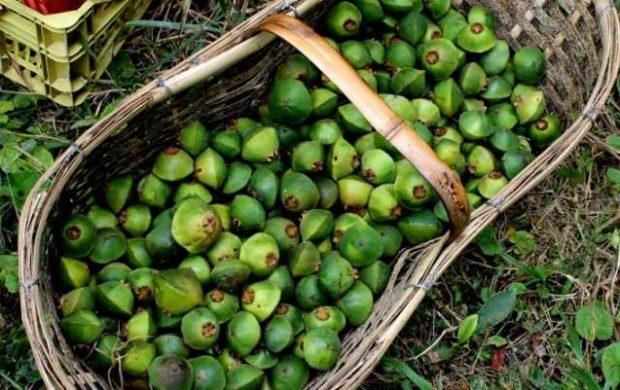 Algumas das frutas brasileiras são muito valorizadas em outros países