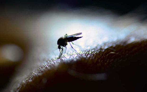 A mosquito in close-up and backlit by a LED lamp