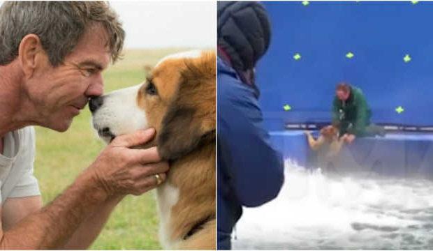 A ONG PETA emitiu uma nota pedindo que as pessoas boicotem o filme