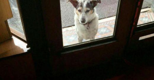 Fotos de cachorros esperando por seus donos fazem sucesso na web