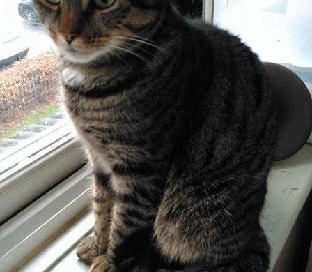 Millie, a gatinha que foi agredida no Reino Unido