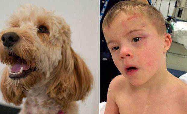 O garoto Riley e seu amigo, o cãozinho Toddy