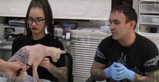 Gato tem pele tatuada na Rússia, e dono é criticado por ativistas