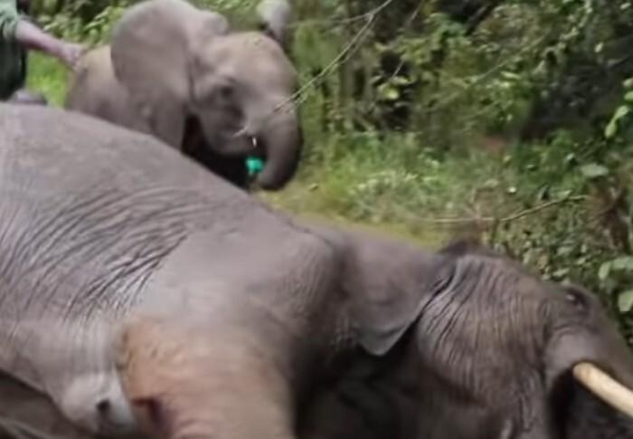 Reprodução de David Sheldrick Wildlife Trust, Youtube