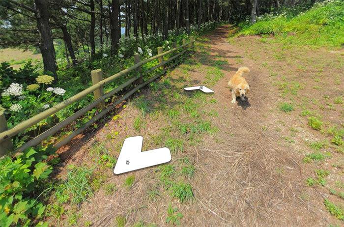 Cachorro segue carro do Google Street View e resulta em álbum pra lá de fofo