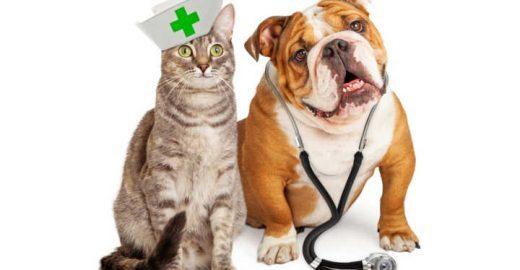 Lei que libera entrada de animais em hospitais já tramita em SP