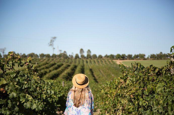 Cidades para degustar um bom vinho no interior de SP