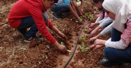Escolas sírias criam hortas e alimentam crianças em meio à guerra