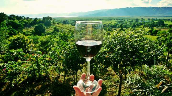 Rota dos Vinhos em São Roque
