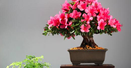Plantas que purificam o ar  da casa ou escritório
