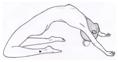 ilustração do Xapa Xana