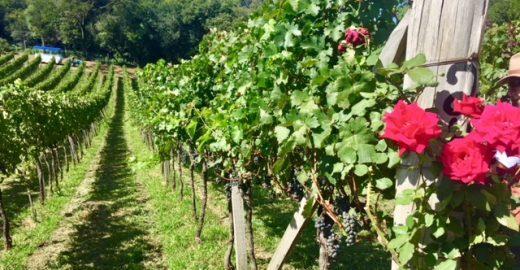 A deliciosa rota do vinho em Bento Gonçalves