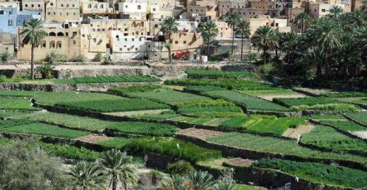 Uma viagem reveladora pelos oásis de Omã