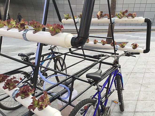 A bike-horta comunitária deve ser conduzida por dois ciclistas