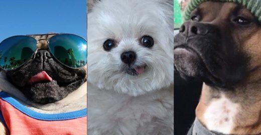 VÍDEO: Estes cachorros representam você e seus amigos