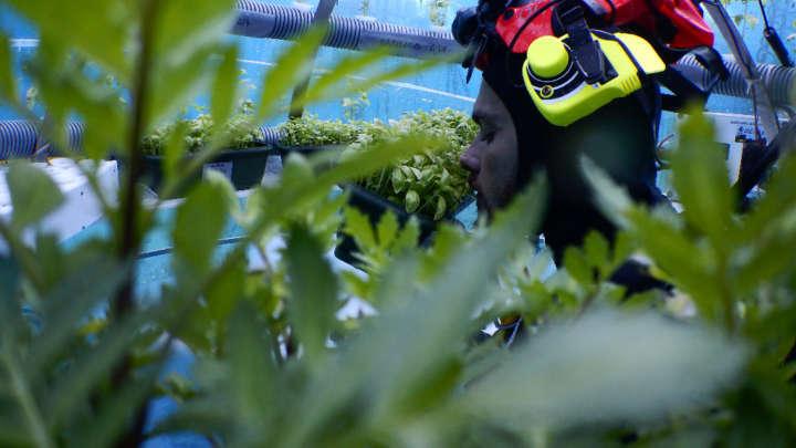 Em vez de roupa de jardinagem, é preciso vestir equipamentos de mergulho na horta no fundo do mar