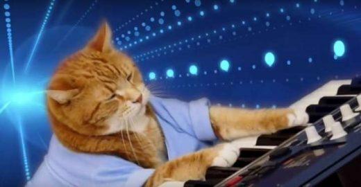 Morre aos 9 anos, Keyboard Cat; veja melhores momentos do gatíneo