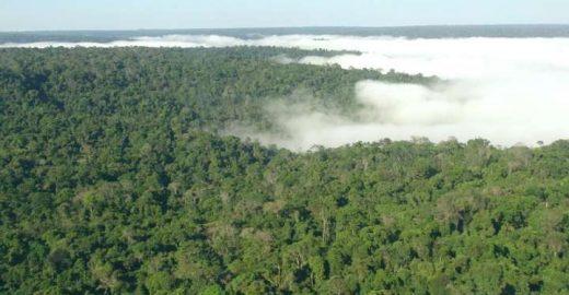 Orçamento do Meio Ambiente no Brasil é o menor dos últimos 5 anos