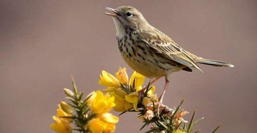 Pesticidas provocam declínio assustador de aves na Europa