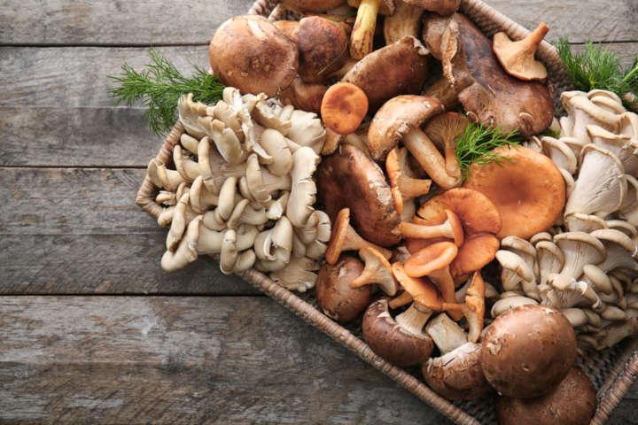 Combustível de cogumelo foi descoberto por engenheiros da Universidade Nacional de Cingapura