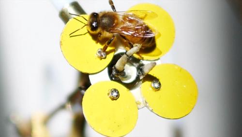Muita pesquisa foi feita para chegar a flores mecânicas atraentes para o inseto