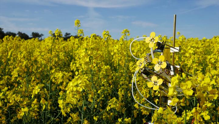 As flores mecânicas são colocadas em meio a flores naturais