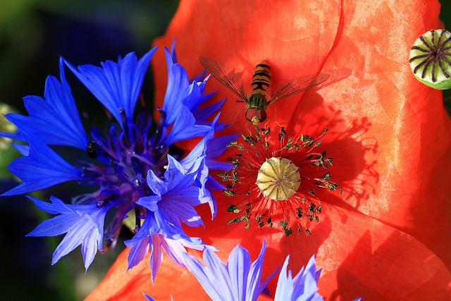 Flores servem de abrigo para os inimigos das pragas