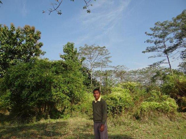 Sozinho, homem planta uma floresta: é o indiano Jadav Payeng