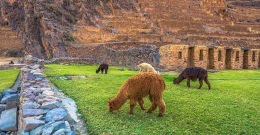 Sítios arqueológicos para conhecer no Peru além de Machu Picchu