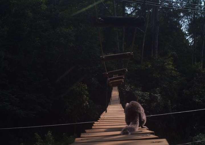 Animais na pista, no caso, pode significar que esse simpático guaxinim está atravessando a ponte para acasalar