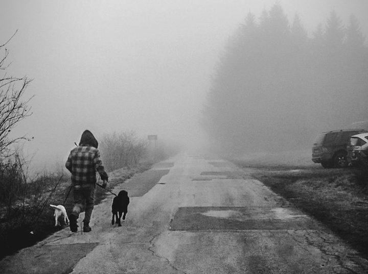 cuidar de cachorros abandonados