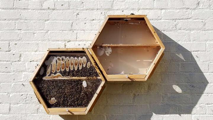Colmeia modular tem parede de vidro para usuário acompanhar trabalho das abelhas